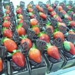 INDIVIDUAL MUD CAKES
